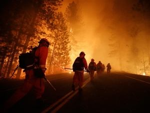 Inmate firefighters, who are paid $1 an hour as part of California's conservation prison-camp program, work the Rim Fire threatening Yosemite. (Jae C. Hong / AP)